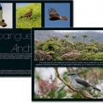 Oiseaux d'Outre-mer, notre nature, réalisée dans le cadre du programme européen de conservation LIFE+ CAP DOM