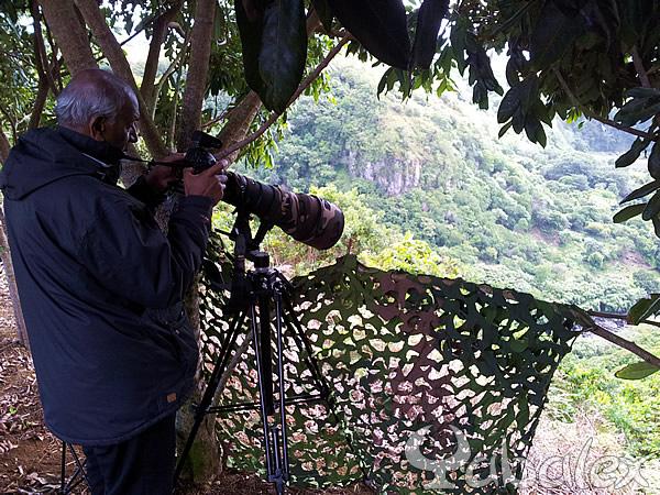 07/10/20012 semaine de photo à la Réunion avec Bird man of Mauritius