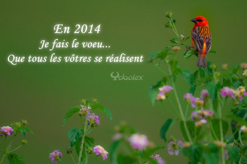 voeux de yabalex pour 2014
