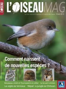 oiseau-mag
