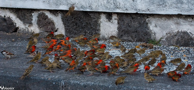 rassemblement de cardinal en ville de Saint-Denis