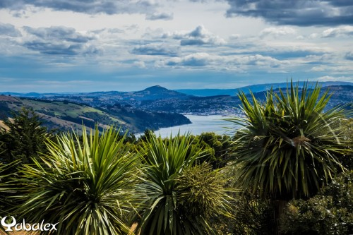 Péninsule de Otago - Dunedin