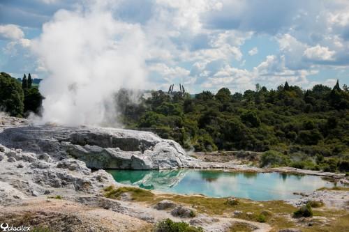 Geyser à Rotorua