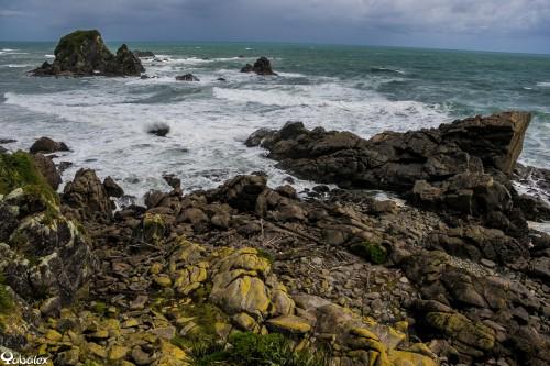 Cap Foulwind pour voir les phoques