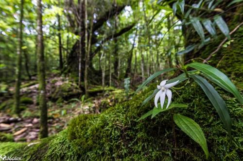 _T3A5205 - Orchidée à Mare Longue