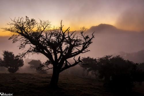 Yabalex_MG_5307 - Paturage dans le brouillard à la Plaine des Cafres