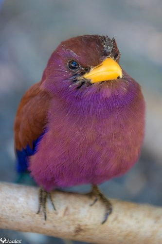 rolle violet en soin à la SEOR