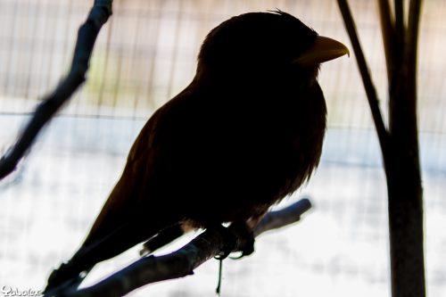 oiseau réunion