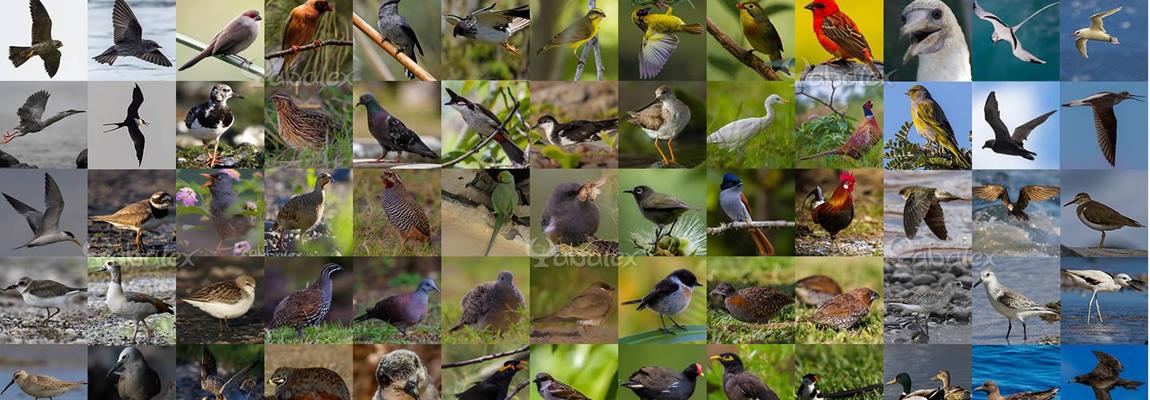 Les oiseaux de La Réunion dans ma galerie photos