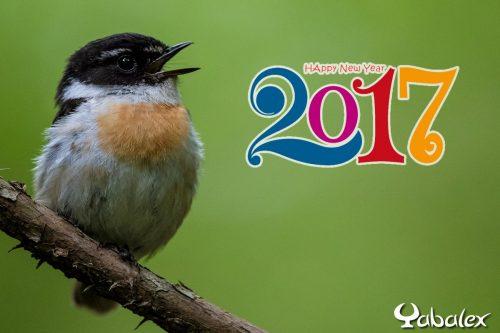 meilleurs vœux 2017 - YabAlex