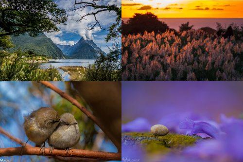 atelier photo de Nature