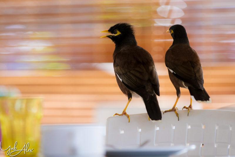 couple de martin sur la chaise d'un restaurant à Saint-Gilles - Yabalex