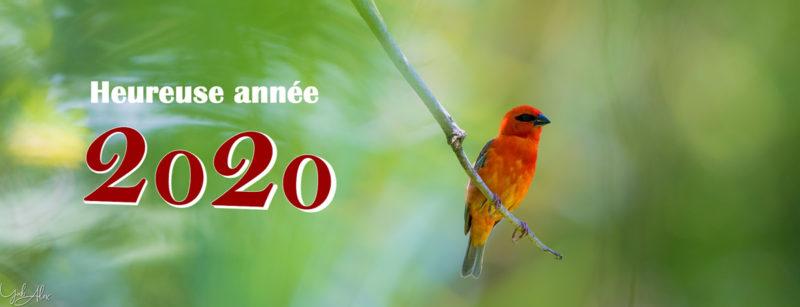 meilleurs vœux pour l'année 2020 -  Yabalex