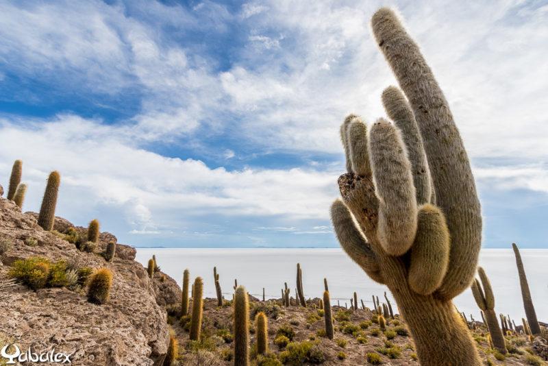 Des cactus qui arrivent à 4m et un record à 12m