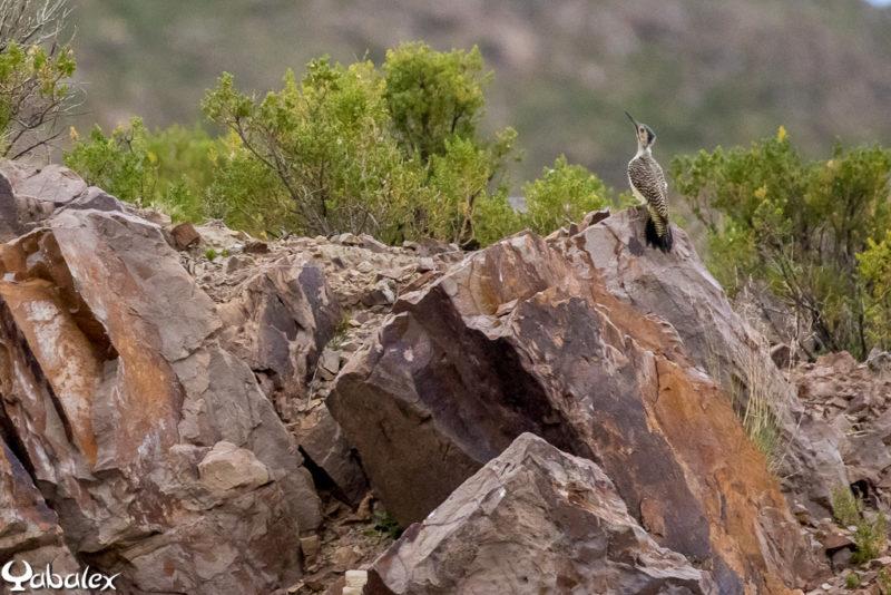 Pic des rochers