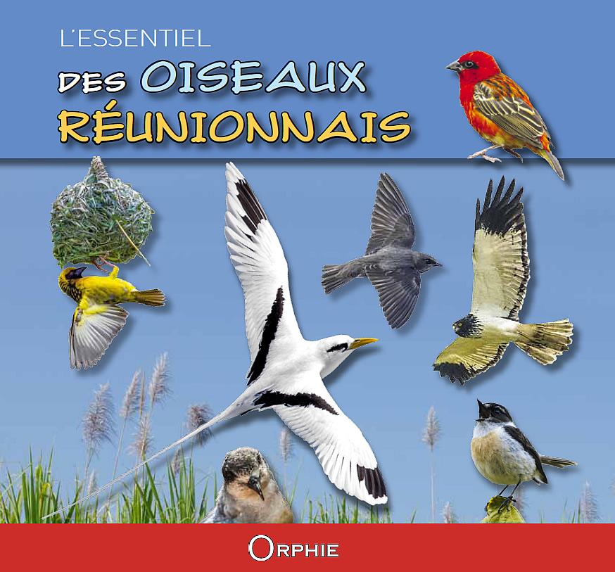"""Résultat de recherche d'images pour """"les oiseaux de la Réunion yabalex"""""""
